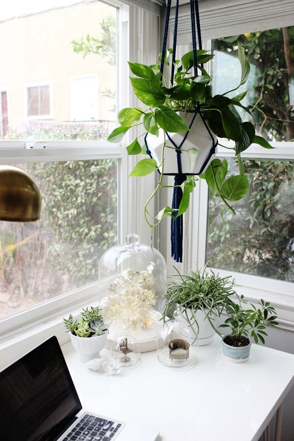 Home Office Decorating Ideas | Office Plants