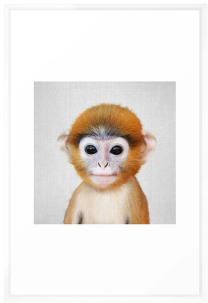 Baby Monkey Colorful Framed Art Print Vector White Frame 26 X38 Decorist