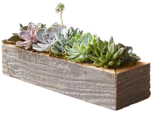 Living Succulent Centerpiece Trough Small Decorist