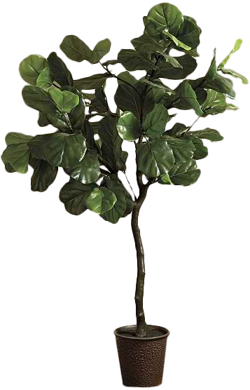 bunny williams faux fiddle leaf fig tree decorist