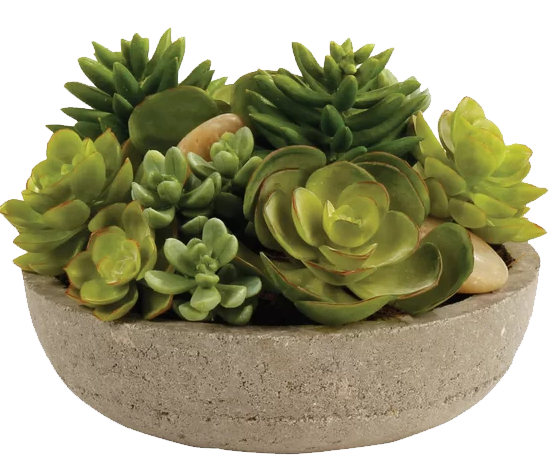 Potted Desktop Succulent Plant In Pot Decorist