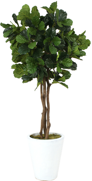 fiddle leaf fig tree in pot decorist