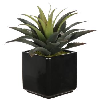 Artificial Star Succulent Desk Top Plant In Pot Black Decorist